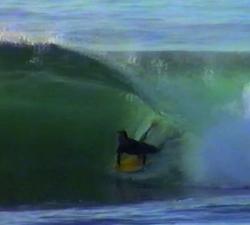 Matt Percy shark island