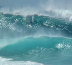 Michael Novy Hawaii