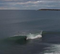 shark island drone